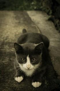 呆萌貓咪高清圖片壁紙