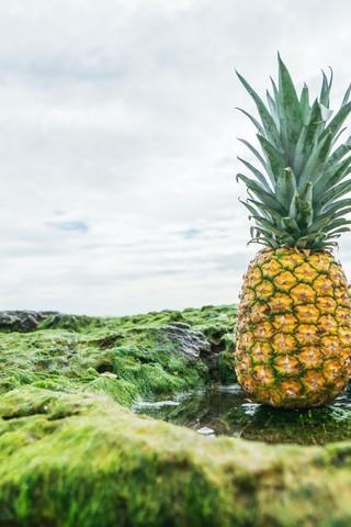 菠萝高清图片壁纸