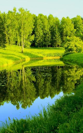 风景壁纸 绿色风景壁纸 绿色自然护眼手机壁纸图片   扫描二维码下载