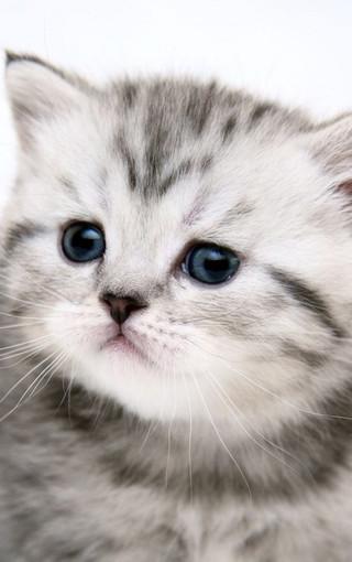 动物壁纸 可爱萌猫高清手机壁纸   扫描二维码下载壁纸到手机 直接