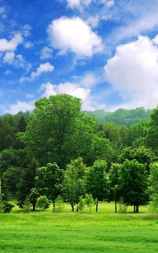 綠色自然的風景畫手機壁紙