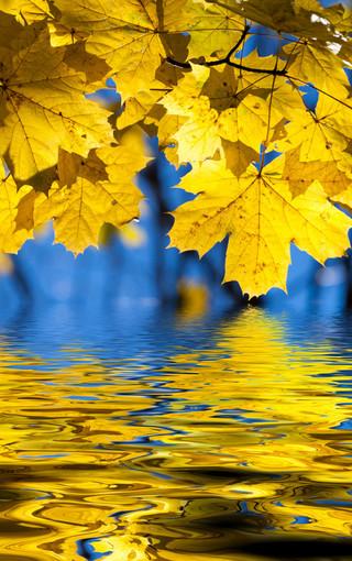 风景壁纸 自然风景壁纸 秋叶高清自然景色手机壁纸