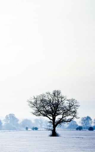 冬季唯美风景手机桌面 第8页-zol手机壁纸