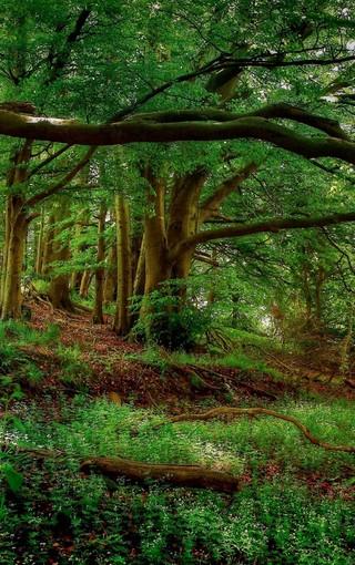 壁纸 风景 森林 桌面 320_510 竖版 竖屏 手机