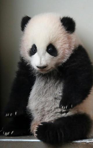 熊猫高清锁屏手机壁纸