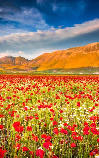 风景壁纸 花朵壁纸 唯美花海手机壁纸