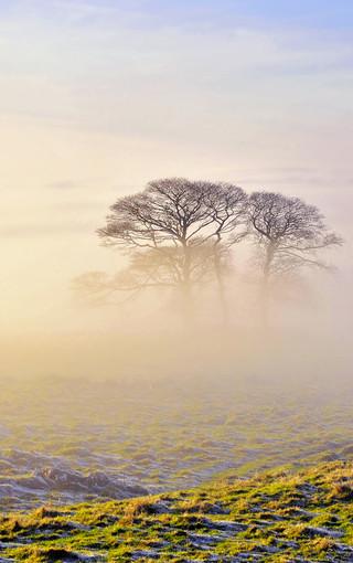 风景壁纸 唯美风景壁纸 雾蒙蒙的自然高清壁纸   扫描二维码下载壁纸