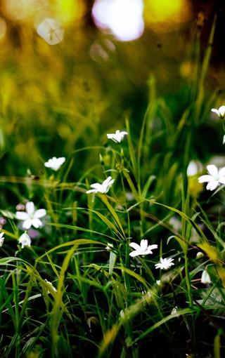 风景壁纸 花朵壁纸 唯美花卉手机壁纸图片