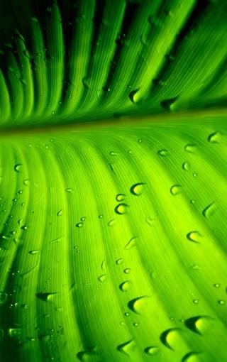 风景壁纸 绿色风景壁纸 护眼绿色手机壁纸   扫描二维码下载壁纸到