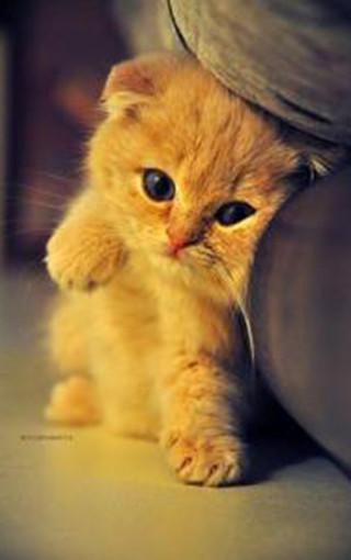 动物壁纸 萌猫壁纸 可爱萌猫手机壁纸   (6/50) 扫描二维码下载壁纸到