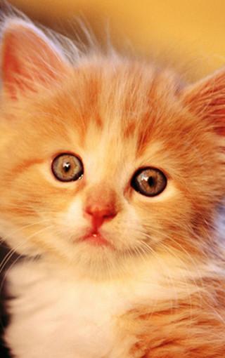 动物壁纸 萌猫壁纸 可爱萌猫手机壁纸   (15/50) 扫描二维码下载壁纸
