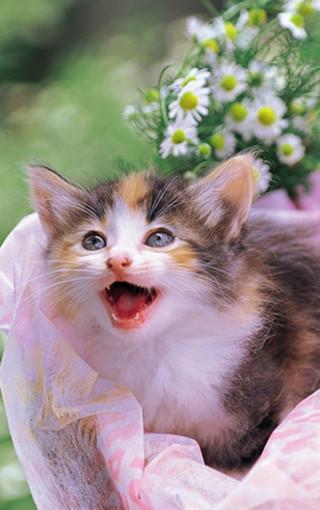 动物壁纸 萌猫壁纸 可爱萌猫手机壁纸   (32/50) 扫描二维码下载壁纸