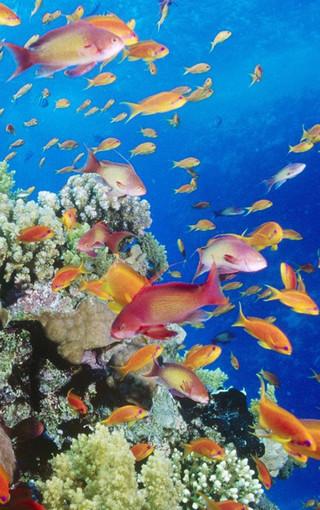 壁纸 海底 海底世界 海洋馆 水族馆 320_510 竖版 竖屏 手机