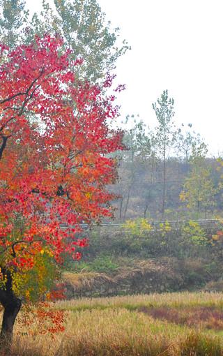 风景壁纸 自然风景壁纸 枫树高清手机壁纸   (23/49) 扫描二维码下载