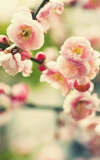 风景壁纸 唯美风景壁纸 唯美花朵手机壁纸