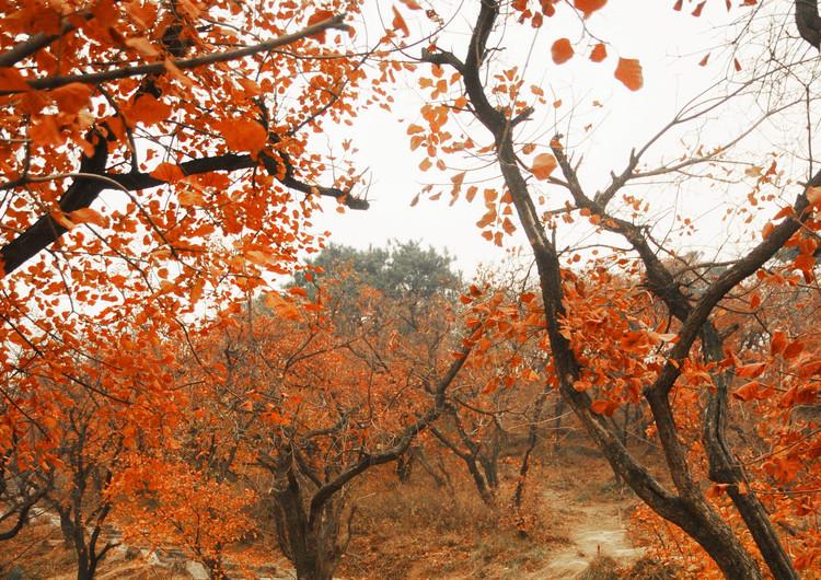风景壁纸 自然风景壁纸 枫树主题高清壁纸   (5/49)