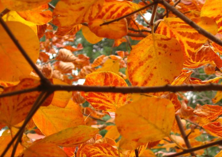 风景壁纸 自然风景壁纸 枫叶主题高清手机壁纸   (20/34) 扫描二维码