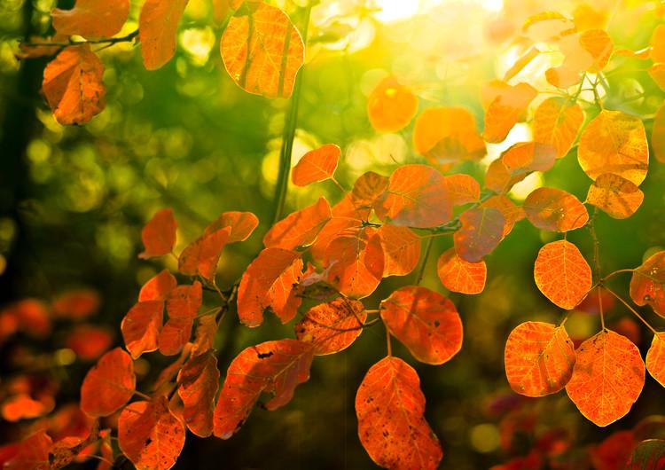风景壁纸 自然风景壁纸 枫叶主题高清手机壁纸   (10/34) 扫描二维码