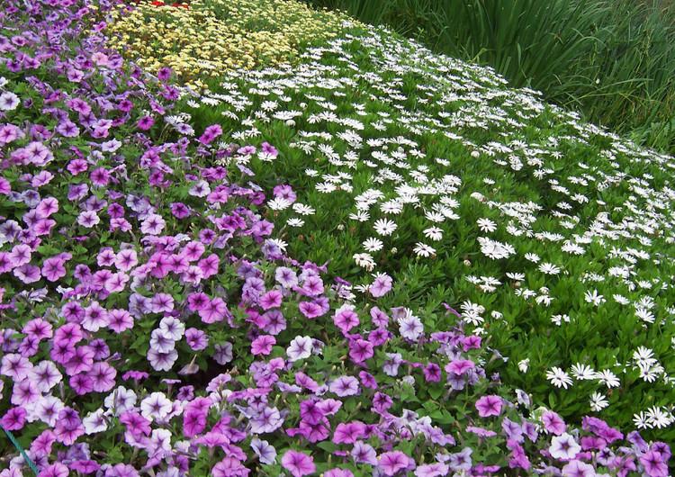 风景壁纸 花朵壁纸 花丛高清手机壁纸