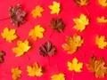 高贵典雅唯美枫叶图片壁纸