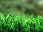 唯美清新绿色小草图片壁纸
