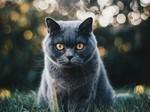 毛茸可爱猫咪图片壁纸
