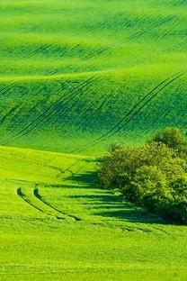 高清绿色草地护眼图片壁纸