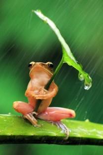 雨中绿叶植物养眼手机壁纸