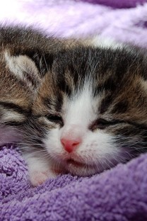 卖萌的可爱猫咪图片壁纸