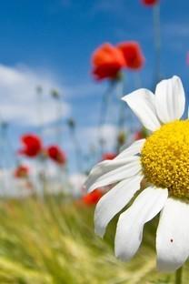 柔美高清的花儿图片壁纸
