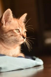 可爱猫图片大全超萌