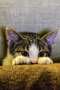 这么可爱的小奶猫图片壁纸