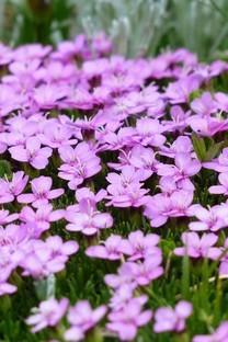 唯美紫色系植物花卉高清图片壁纸2