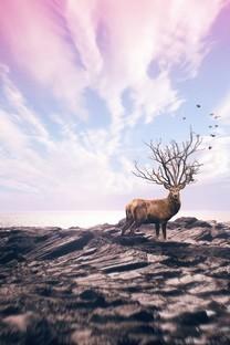 精选奇异自然风光图片壁纸
