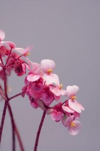 小清新花卉高清图片壁纸3