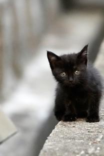 高清萌宠小猫咪图片壁纸
