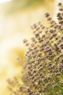 清新好看的花风景图片壁纸4