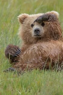 可爱小熊桌面图片壁纸2