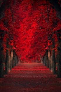 林间小路高清图片桌面壁纸