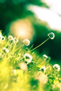 草地上的清新小花图片壁纸2