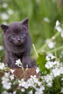 草地里玩耍的猫咪图片壁纸