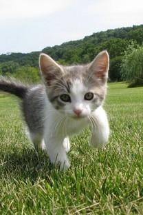草地里玩耍的猫咪图片壁纸2