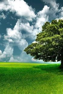 唯美意境简单树图片壁纸