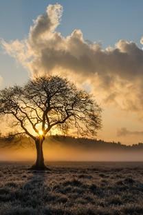 一棵树背景图片高清壁纸2