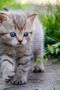 草地里玩耍的猫咪图片壁纸3