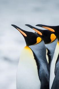 南极可爱企鹅图片桌面壁纸