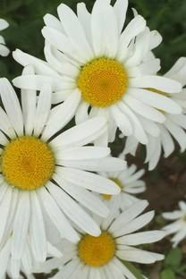 花朵系列小清新图片面壁纸合集包2