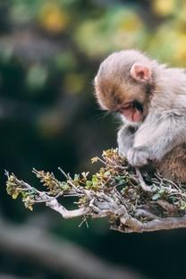 可爱的小猴子图片壁纸3