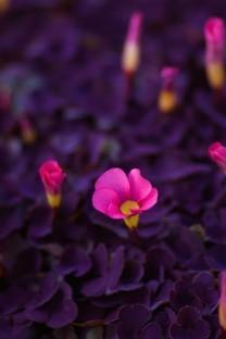 花朵系列小清新图片面壁纸合集包3