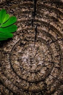树叶微距摄影唯美高清图片壁纸